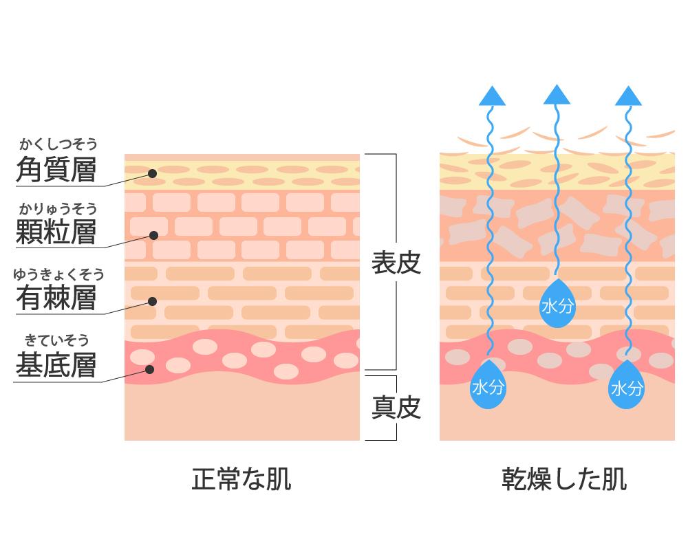皮膚の比較