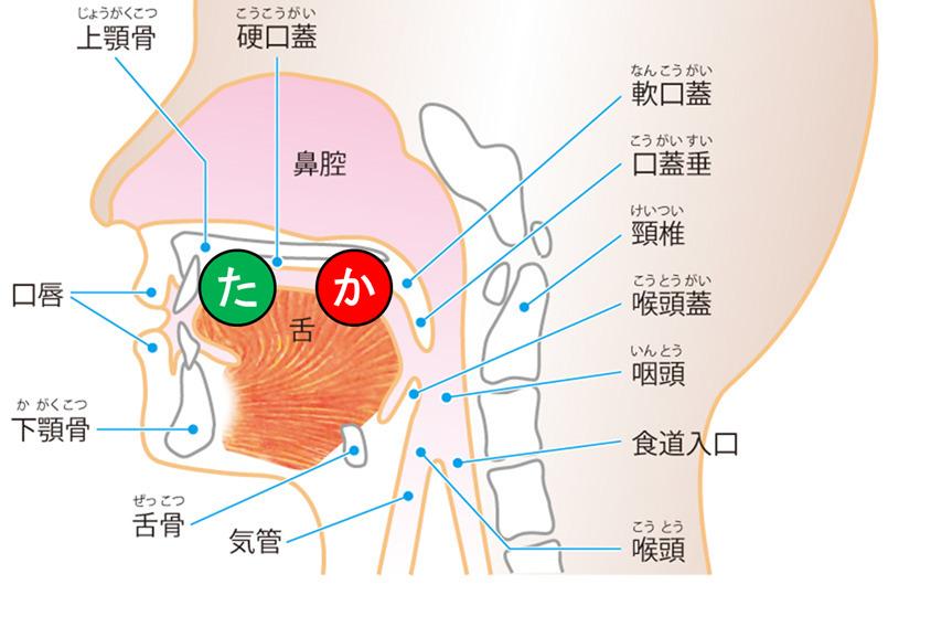 発音における舌の位置図け